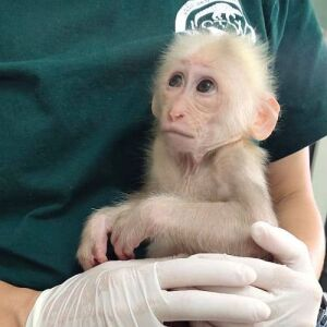 Recent Rescues & A Release At The Laos Wildlife Sanctuary!