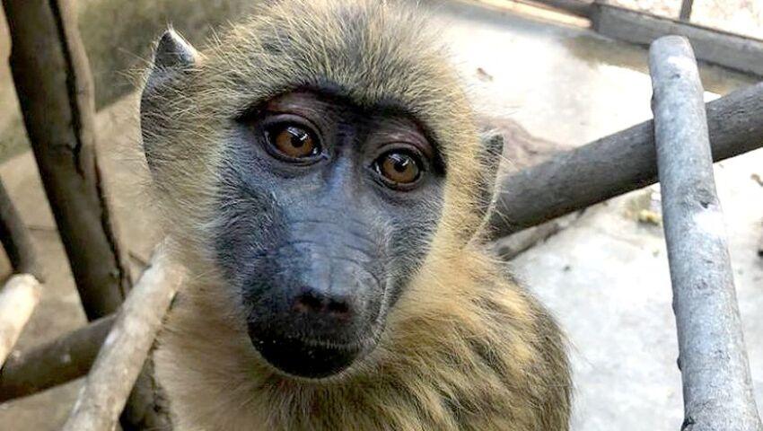 Lilongwe Wildlife Centre - Pretzel's Story