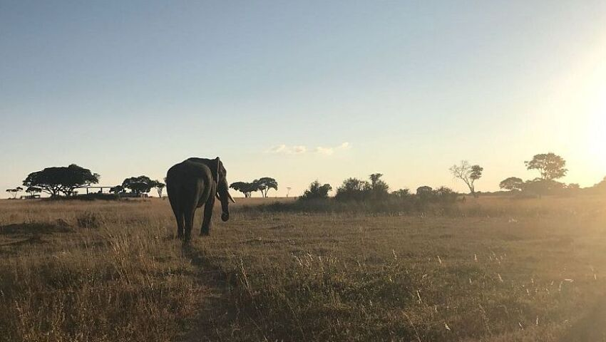 An Update From The Rhino and Elephant Conservation Project – From Anti-Poaching Initiatives to Babies Being Born!