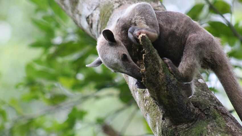 Welcome To The Jungle - Read Leanne's Account About Of The Sloth Conservation And Wildlife Experience!