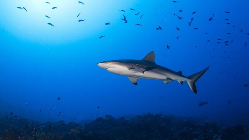 Shark Awareness Day 2017 - 50 Million Sharks Are Caught In Nets Every Year!