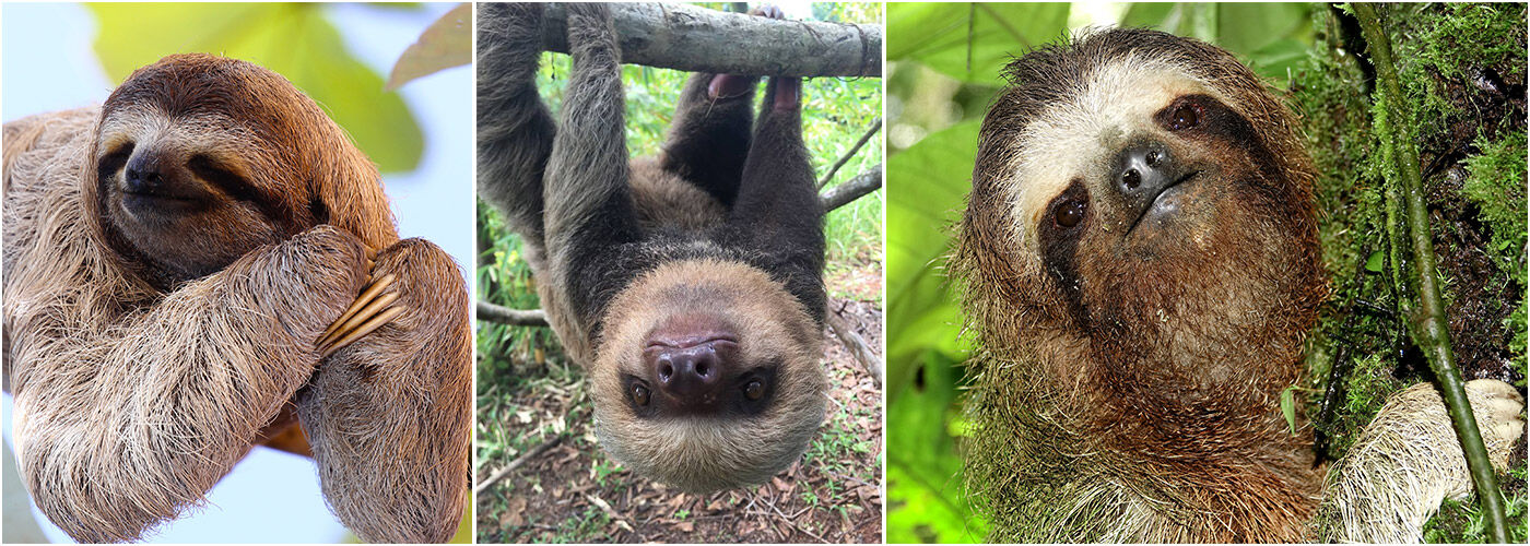 Working With Sloths