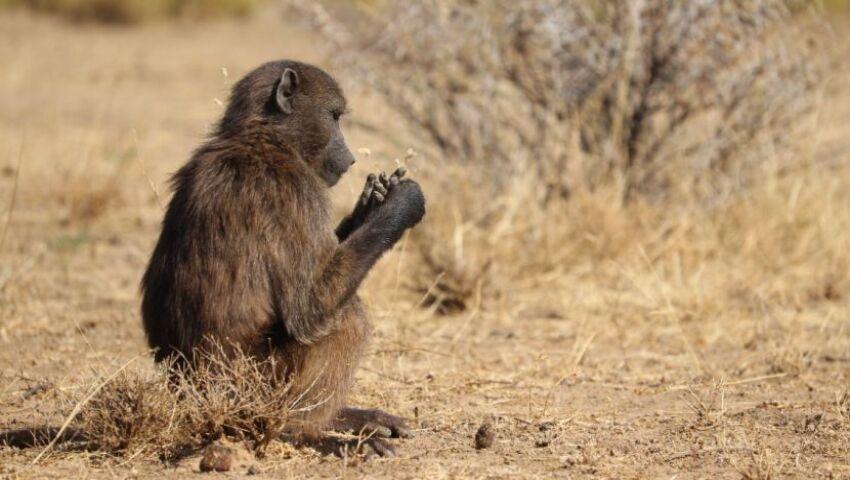Namibia Wildlife Sanctuary Volunteer Reviews