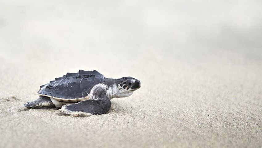A Day In The Life Of A Costa Rica Turtle Conservation Volunteer!