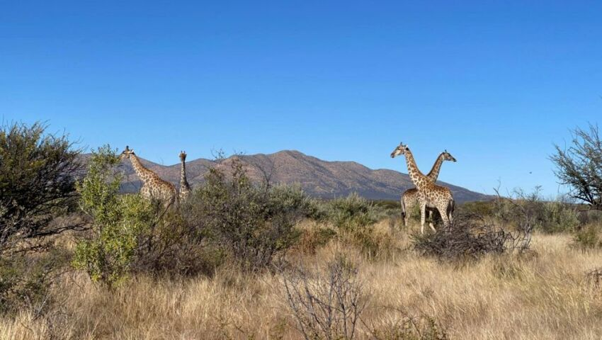 Eszter's Experience of the Namibia Wildlife Sanctuary!