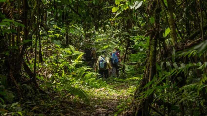What's The Latest In The Amazon? - 87% Of All Biodiversity Has Returned To Their Regenerating Rainforest!