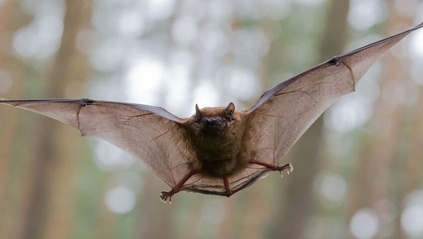 Why Are Bats Associated With Vampires? A Peek Into The Realm Of These Misunderstood Mammals This Halloween