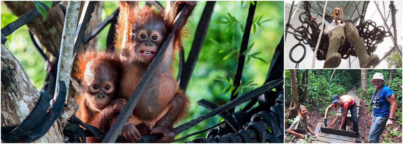 IAR Orangutan Project
