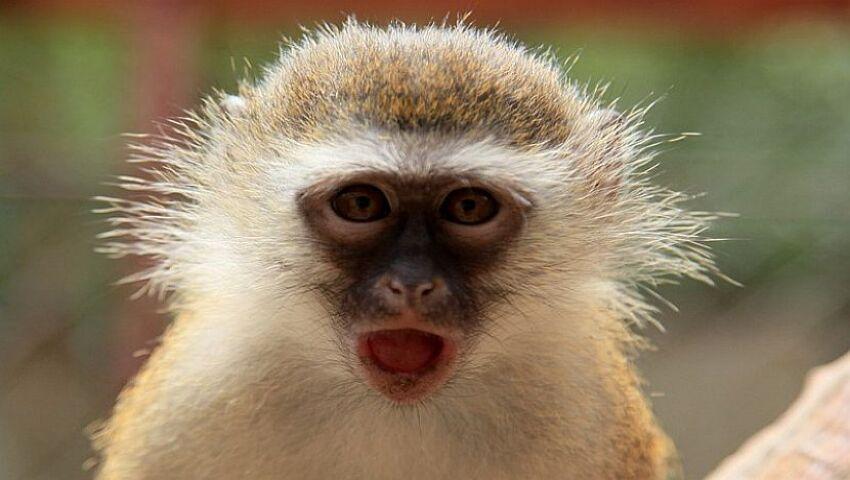 International Monkey Day 2015