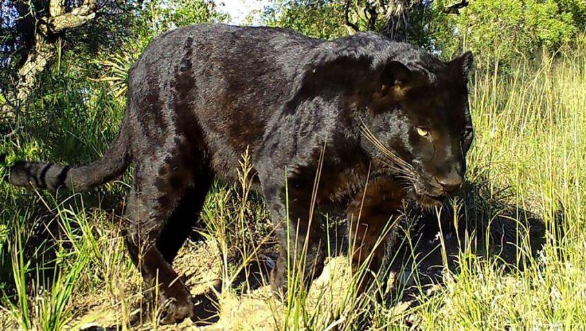 Mowgli's New Home at the Born Free Big Cat Sanctuary!