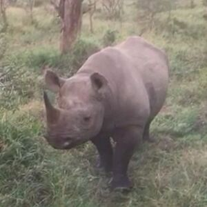 An Update From Zululand – Close Encounters of the Animal Kind!