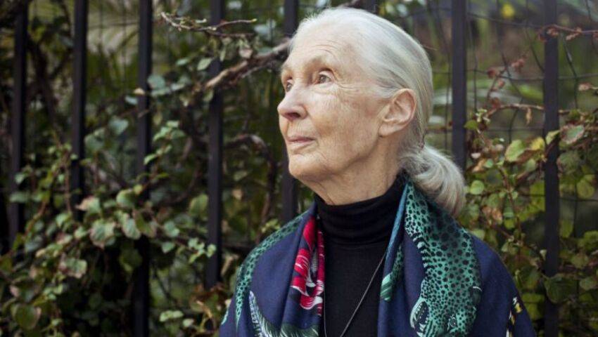 Happy Birthday Dame And Dr. Jane Goodall! What Has This Lady Accomplished In Her 86 Years?