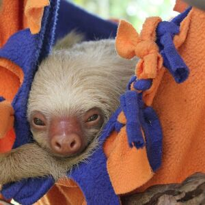Meet The Founder Of The Sloth Conservation And Wildlife Experience