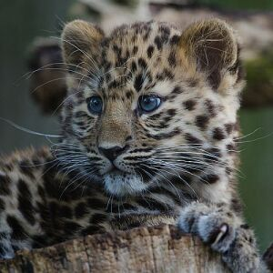A Timeline Of  16 Endangered Animals – From Creatures Lost, To Those That Still Need Saving