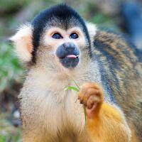 Amazon Conservation Project Peru