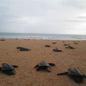 The Great Turtle Project – A Typical Day In The Life Of A Volunteer