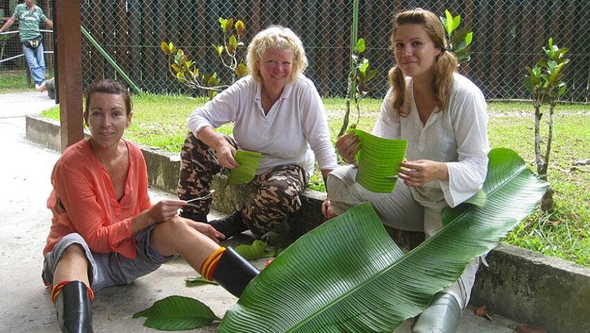 The Great Orangutan Project - A Volunteer's Perspective