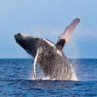 The Great Whale Project