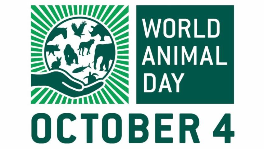 World Animal Day 2020