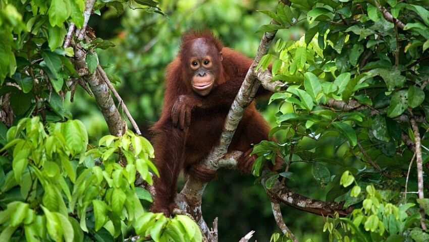 Which Orangutan Project Is Right For Me?
