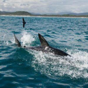 Great White Shark Sightings in 2019