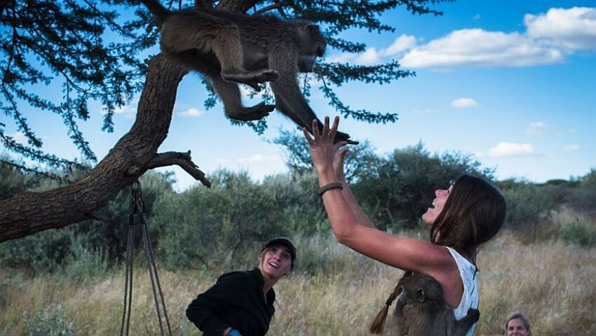 How Volunteering With Animals In Namibia Will Change Your Life!
