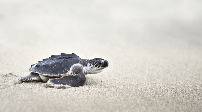 ​A Day In The Life Of A Costa Rica Turtle Conservation Volunteer!