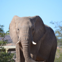 A Day In The Life Of An Elephant Volunteer!