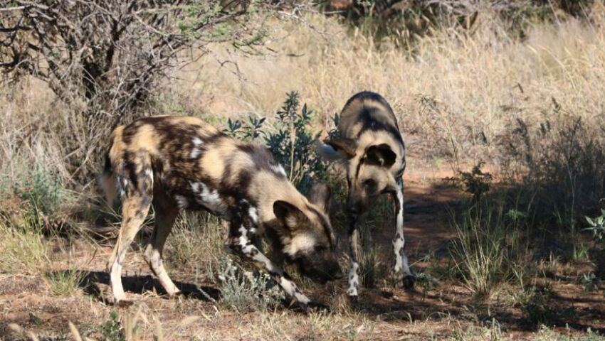 Anita And Graham's Volunteer Review Of The Namibia Wildlife Sanctuary!