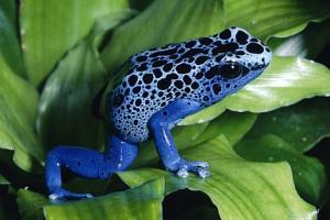 Amphibian & Reptile Monitoring