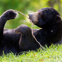 An Update From Samboja - The New Sun Bear Enrichment Area Is Open For Business!