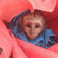 An Update From The Lilongwe Wildlife Centre - Rescuing Tom Brady