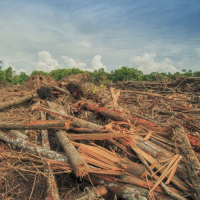 Are The Contents Of Your Cupboards Harming The World? Palm Oil Uncovered...