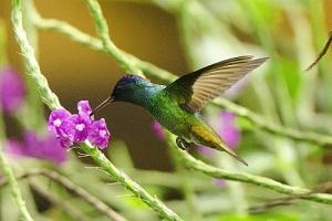 Avian Monitoring