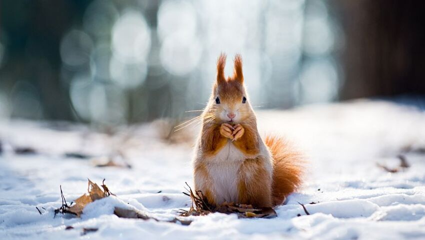 Happy New Year From Winter's Cutest Creatures