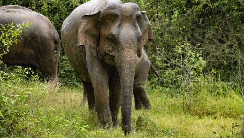 The Impact Of The Great Elephant Project On Human-Elephant Conflict In Sri Lanka