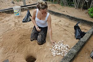 Burying The Eggs Brought By Vendors