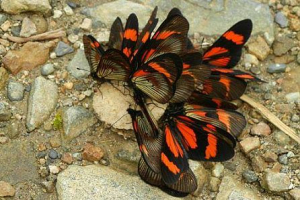 Butterfly Monitoring
