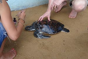 Caring For Turtles That Live At The Centre