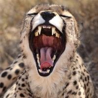 Check Out Doug's Volunteer Review of the Namibia Wildlife Sanctuary