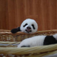 Check out these gorgeous photos from the Panda Volunteer Experience!