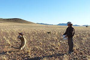 Cheetah Feed