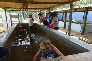 Cleaning And Constructing The Hatcheries