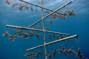 Coral Nursery Maintenance