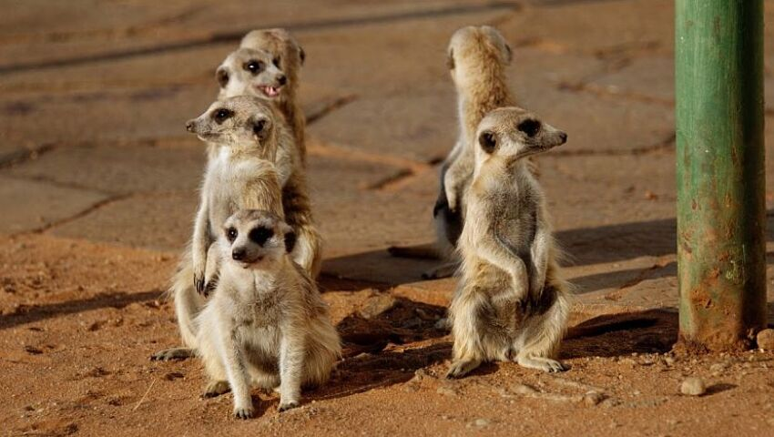 The Namibia Wildlife Sanctuary - A Project In Pictures