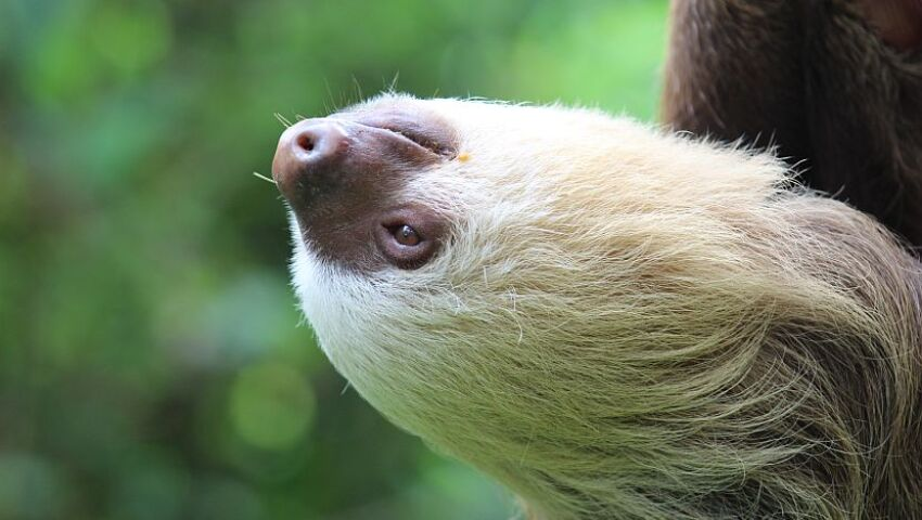 International Sloth Day 2017 Infographic!