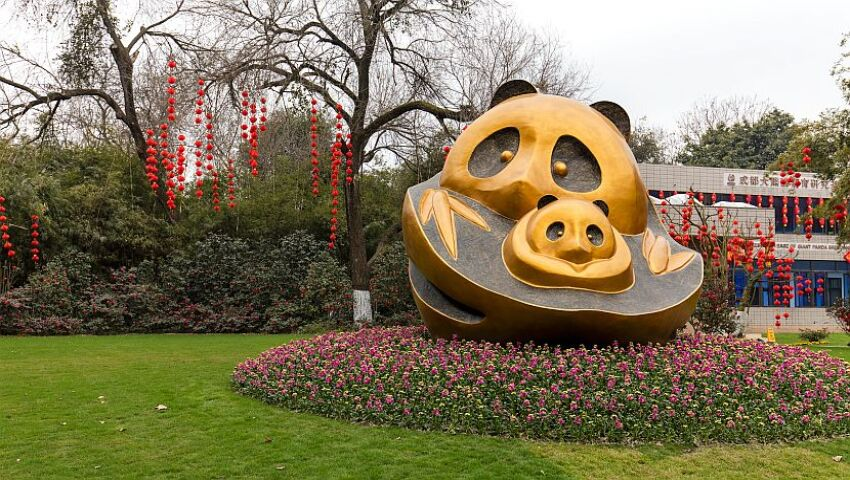 How The Chengdu Panda Base Has Changed The Face Of Conservation In China