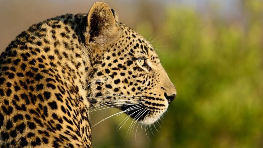 Human - Wildlife Conflict In Namibia