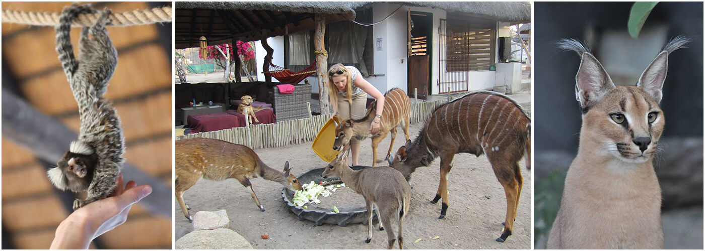 Wildlife Orphanage in South Africa