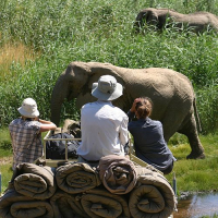 Desert Elephants in Namibia – Family Programme